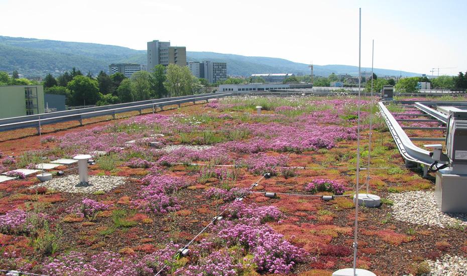 JACKODUR®- La toiture inversée jardin ou végétalisée